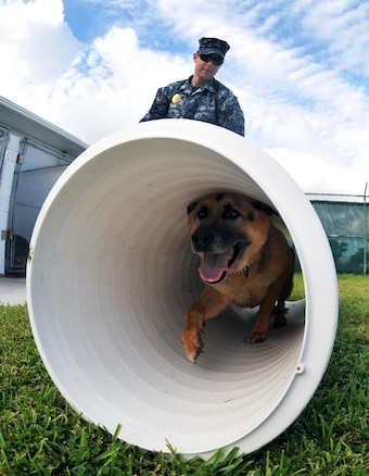 u s department of > photos > photo essays > essay view navy petty officer 2nd class justin sosa directs hopski a military working dog through