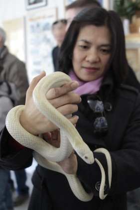 A station resident holds one of the snakes on display at the White Snake Museum as part of the Cultural Adaptation trip, Dec. 7, 2012. Patrons were able to learn about the history of the snakes and had the opportunity to hold one. The trip also included a tour of the Shirohebi Shine, which is now open to the public.