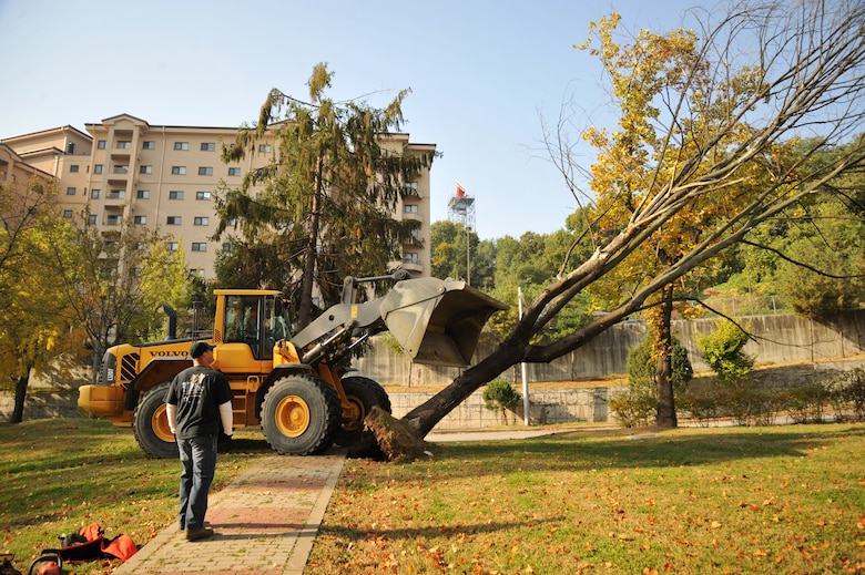 Tech. Sgt. Timothy Barley, 51st Civil Engineer Squadron heavy equipment operator, takes down a tree at Mustang Valley Park at Osan Air Base, Republic of Korea, Oct. 26, 2013. Members of the 51st CES removed safety hazards around the park by using heavy equipment to take down dead trees that could topple over in the next big wind storm. (U.S. Air Force photo/Staff Sgt. Emerson Nuñez)