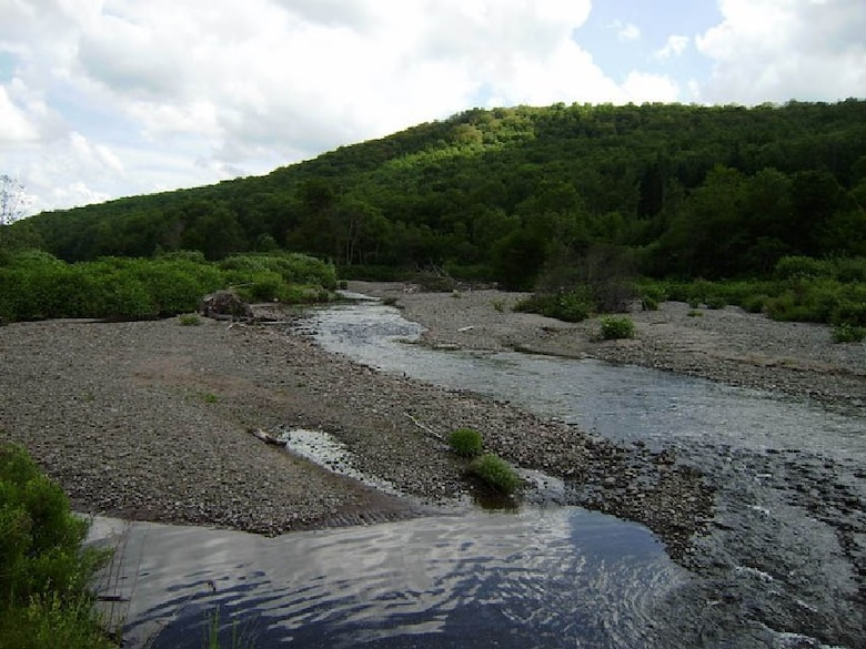 A proposed location for one of the stream restoration efforts for Livingston Manor.