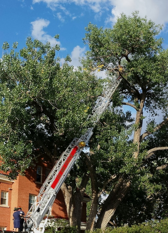 The firefighters of F.E. Warren Air Force Base, Wyo., made a special house call to rescue a cat from a tree Aug. 27, 2013.Senior Airman Rodney Turner, 90th Civil Engineer Fire Department firefighter, scaled the ladder to a height of 60 feet in order to rescue Max from the tree.The Fire department took this as an opportunity to practice ladder training while providing a community service.  (U.S. Air Force photo by Maj. John Dines)