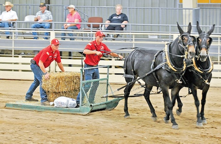Sgt. Casey Simmons, left, loads and unloads hay bales, while Sgt. Brandon Stubbs, right, drives mules Jane and Julie through an obstacle course in the Draft Horse Competition at the Kansas State Fair in Hutchinson.  Photo by: J. Parker Roberts, 1ST INF. DIV.
