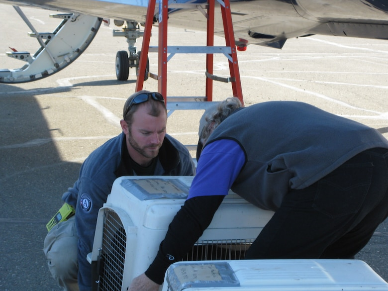 GALENA, Alaska – From left, FEMA Corps team leader Andy John and Jon Bushnell offload Tiny and Cruger from the plane's cargo hold. The dogs had been housed with Second Chance League in Fairbanks as they waited for a return flight home to Galena (U.S. Air Force photo/Bill Hughes)