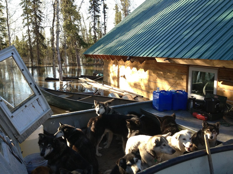 Jon Korta's sled team waits out the flood in a boat for two days. Korta said the team, which has raced in the Iditarod, is used to difficult challenges.