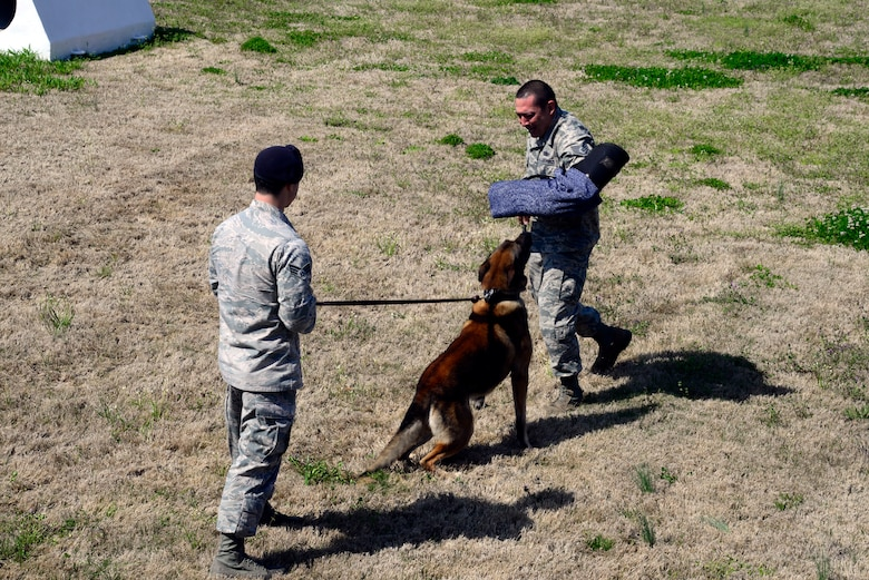 Staff Sgt. Adam Bearden trains with Senior Airman Eric Formolo and military working dog Rocky. Bearden works with all of the dog teams at Maxwell Air Force Base. (U.S. Air Force photo by Senior Airman William Blankenship)