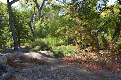 ALBUQUERQUE, N.M., -- Autumn at the Ecosystem Revitalization at Rt. 66 project area (North of Central, on the west side of the Rio Grande).  This is near one of the pedestrian bridges installed to encourage recreational use of the area. Photo taken Oct. 16, 2012 by Alicia Austin Johnson.