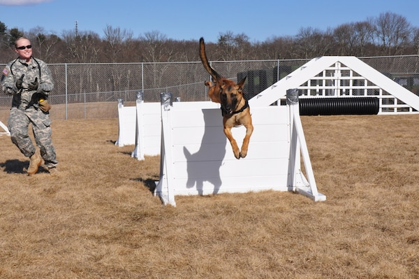 Dog teams at Connecticut National Guard's 928th Military Working Dog Detachment train at a minimum of four hours on patrol and obedience each week. The 928th from Newtown, Conn., is a full-time unit manned 24 hours a day, seven days a week and is the only military working dog unit in the United States that is part of the Army Guard/Reserve component.