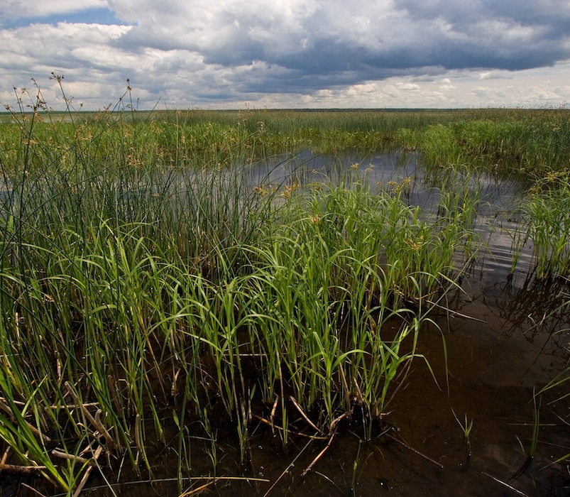 Wetland Types - Marshes