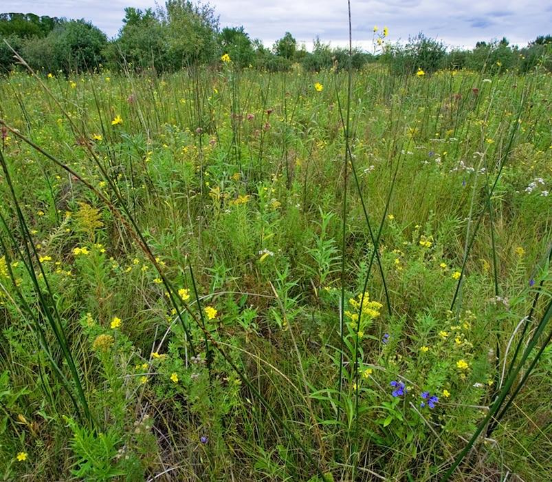 Wetland Types - Fens