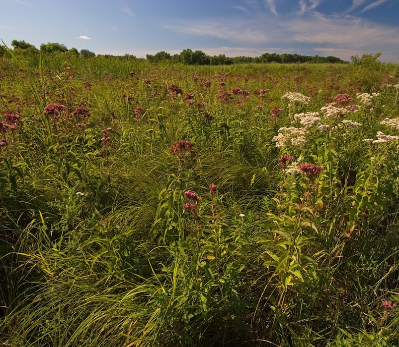 Wetland Types - Wet or Sedge Meadows
