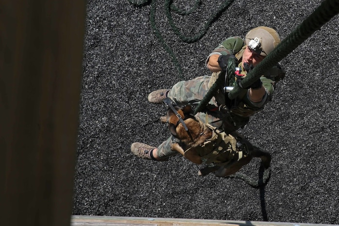 A Multi-Purpose Canine handler, with U.S. Marine Corps Forces Special Operations Command, fast-ropes with his canine aboard Stone Bay, Oct. 1, 2014. As MARSOC continues to demonstrate their capabilities and versatilities, MPC handlers with the command are preparing themselves and their canines for new areas of operation, they'll be deploying to. (U.S. Marine Corps Photo by Cpl. Steven Fox/Released)
