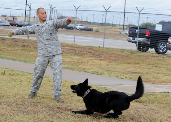 Staff Sgt. Andre Hernandez throws a ball for his dog, Ivan, Nov. 14, 2014, at Dyess Air Force Base, Texas. Once a dog has performed his duties correctly and adequately during training and demonstrations, they are rewarded with a toy for complying with their handler. Hernandez is a 7th Security Forces Squadron K-9 military working dog handler. (U.S. Air Force photo/Senior Airman Shannon Hall)