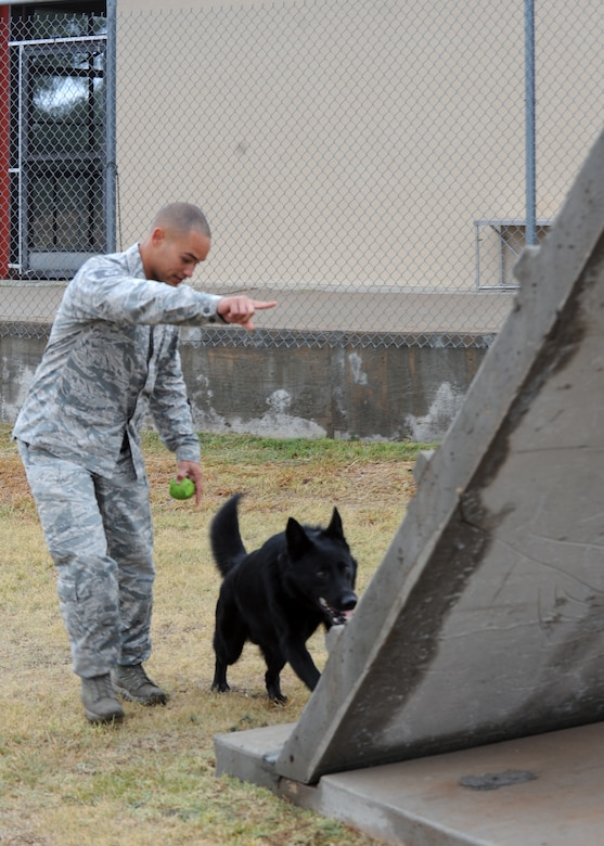 Staff Sgt. Andre Hernandez goes through different obstacles with his dog, Ivan, Nov. 14, 2014, at Dyess Air Force Base, Texas. Most of Hernandez and Ivan's days are spent training on their course, working on commands and obedience, providing security and explosive and narcotic deterrence for the base. Hernandez is a 7th Security Forces Squadron K-9 military working dog handler. (U.S. Air Force photo/Senior Airman Shannon Hall)