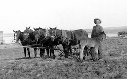 Christoper C. Beeks works on his farm north of Garrison, North Dakota in 1912. His father William was in the Union Army, Company K of the 6th Iowa Volunteer Calvary. After Christopher retired from farming, he sold his land and moved to Washburn, N.D. where he died in 1936. (Photos are property of the Beeks family and may not be reused without consent.)