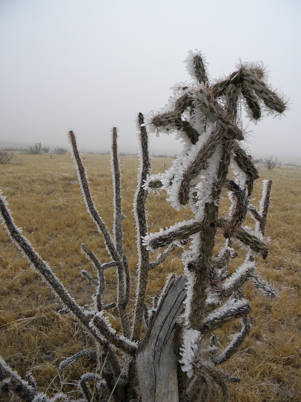 """A cactus is 'Frozen to a point' outside of Two Rivers Dam in Chavez county, N.M."""