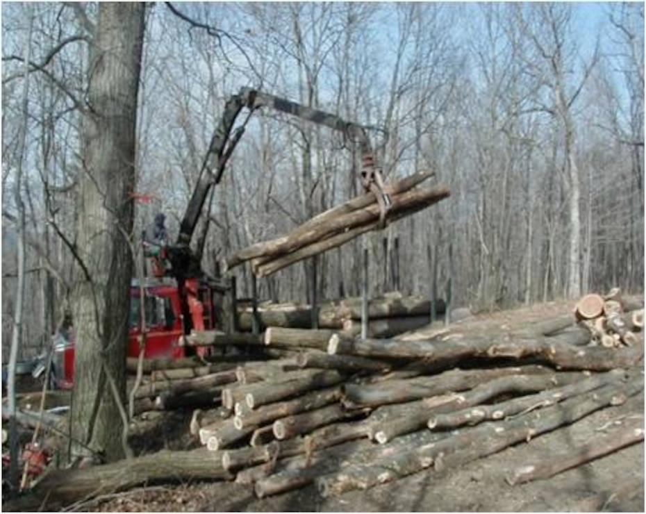 Logging operations as part of the forest management program