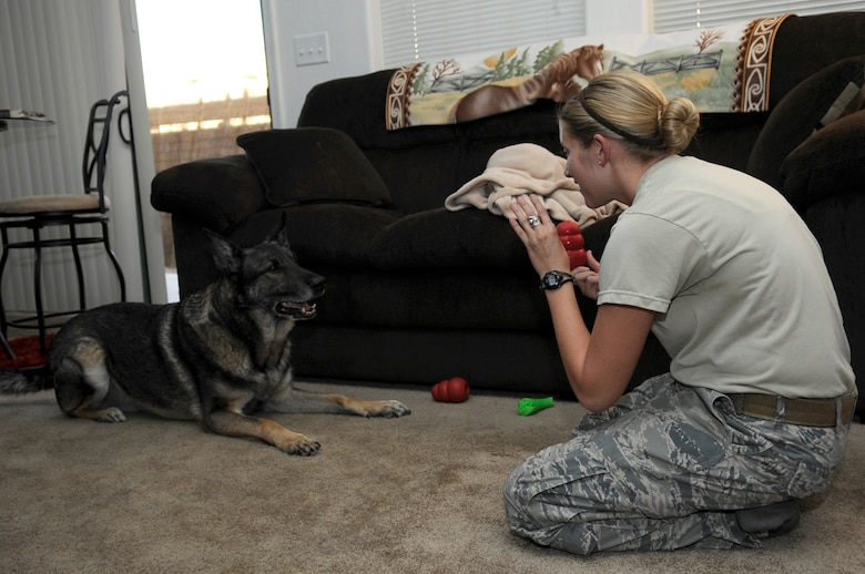 U.S. Air Force Staff Sgt. Alexandra Springman, 355th Security Forces Squadron military working dog handler, plays with Dexter, a retired MWD, in Tucson, Ariz., Feb. 25, 2014. Springman was Dexter's last handler before he retired on Feb. 19, 2014. (U.S. Air Force photo by Airman 1st Class Betty R. Chevalier/Released)
