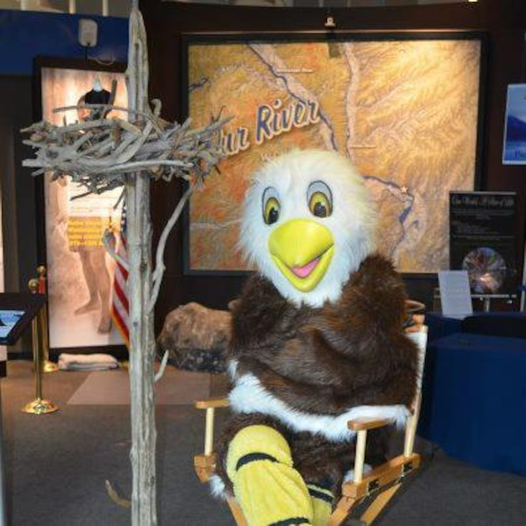 Eric the Eagle getting ready for Masters of the Sky, Feb. 14, 15, 16 at the National Great Rivers Museum in Alton, Ill.