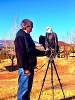 ABIQUIU LAKE, N.M. -- Maxwell, the Wildlife Center's resident educational bald eagle, meets volunteers before they go out to count eagles, Jan. 4, 2014.