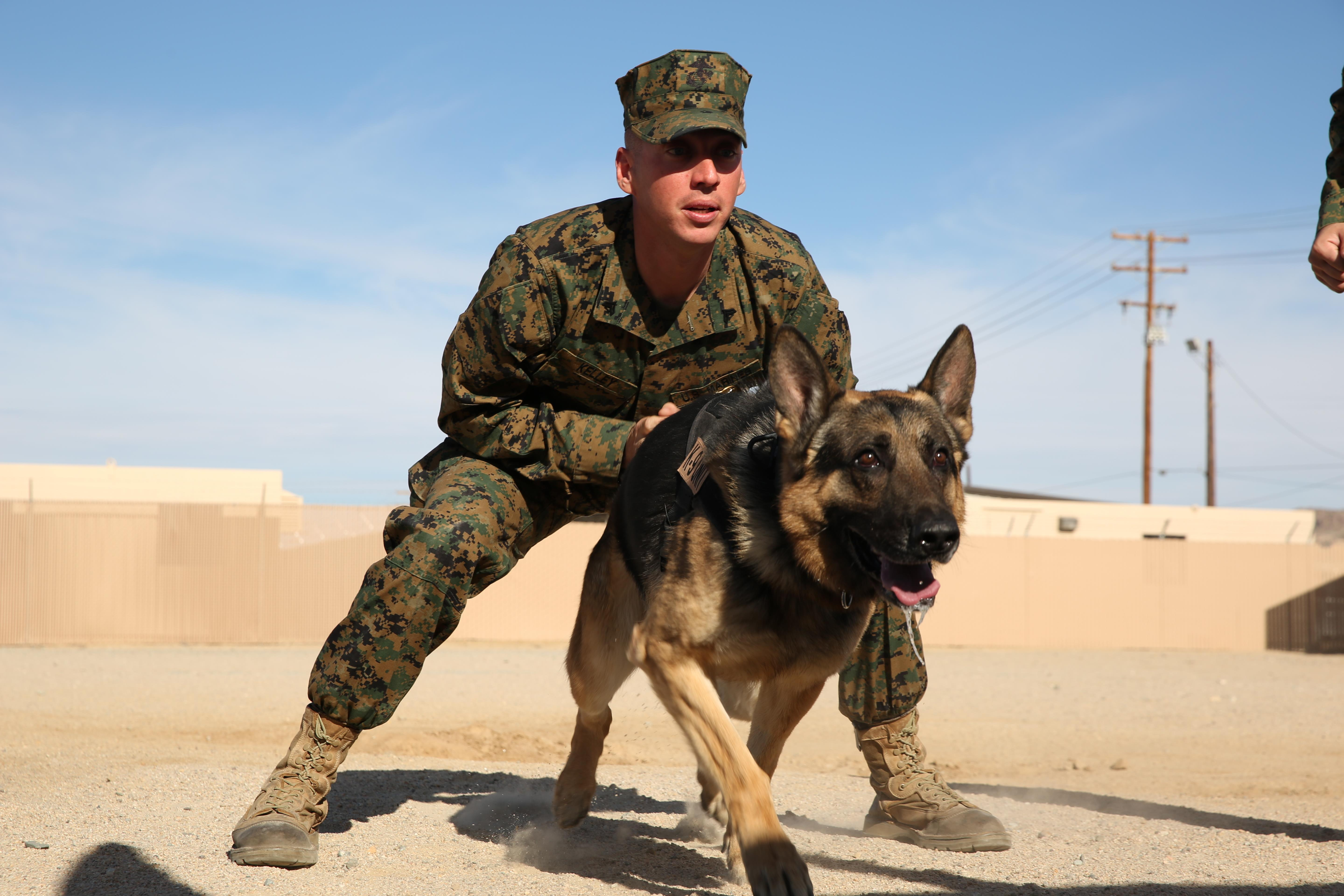 Training Center For Military Dogs