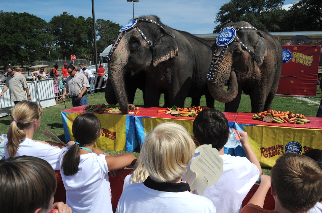 """Elephants eat fruits and vegetables during """"Pachyderm and Popsicles,"""" hosted by the Ringling Brothers Circus for Keesler deployed families July 3, 2014, at the Mississippi Coast Coliseum.  The Circus also joined with the Keesler Youth Center to present a banner decorated with Keesler kids' hand prints and an elephant footprint to the Armed Forces Retirement Home July 2. (U.S. Air Force photo by Kemberly Groue)"""