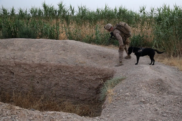 Lance Corporal Daniel Buzalsky, improvised explosive device detection dog handler, Bravo Company, 1st Battalion, 7th Marine Regiment, inspects an empty well with his IED detection dog, Macon, during a mission in Helmand province, Afghanistan, July 4, 2014. Buzalsky, a native of Vancouver, Wash., and the company operated in Gereshk for three days and were involved in numerous kinetic engagements with Taliban insurgents.