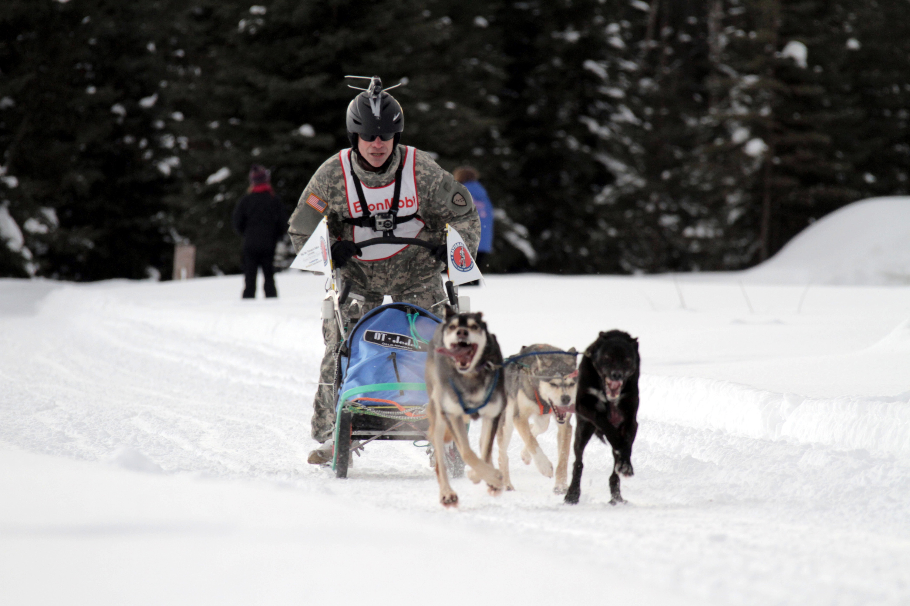 Alaska Sled Dog Racing 13