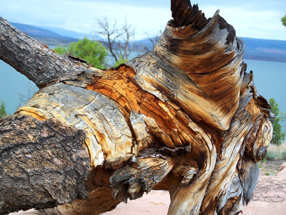 A distinctive tree trunk at Abiquiu Reservoir, New Mexico. Photo by Maj. Andre Balyoz, Jan. 2, 2006.
