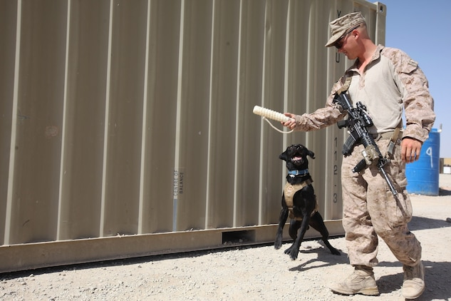 Cpl. Taylor Cross, a working-dog handler with 1st Battalion, 7th Marine Regiment, walks alongside his working dog, Vito, aboard Camp Leatherneck, Helmand province, Afghanistan, July 7, 2014. Vito, a 6-year-old purebred black lab, is trained to detect explosive material, both military and homemade. (U.S. Marine Corps photo by Cpl. Cody Haas/ Released)