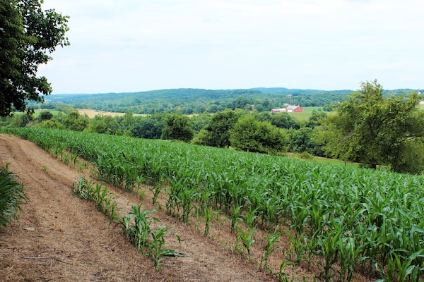 This corn-covered ridge overlooks the primary battlefield at Monocacy Junction. Confederate leadership surveyed the land from this position. The red barn in the distance marks the location of the fiercest fighting between Union and Confederate troops.