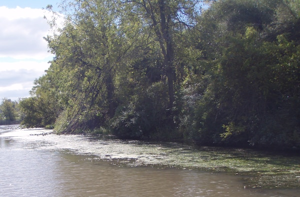 Dense hydrilla beds formed along the banks of the Erie Canal, pictured in September 2013. Biologists are concerned about hydrilla spreading to multiple water bodies throughout New York and into the Great Lakes.