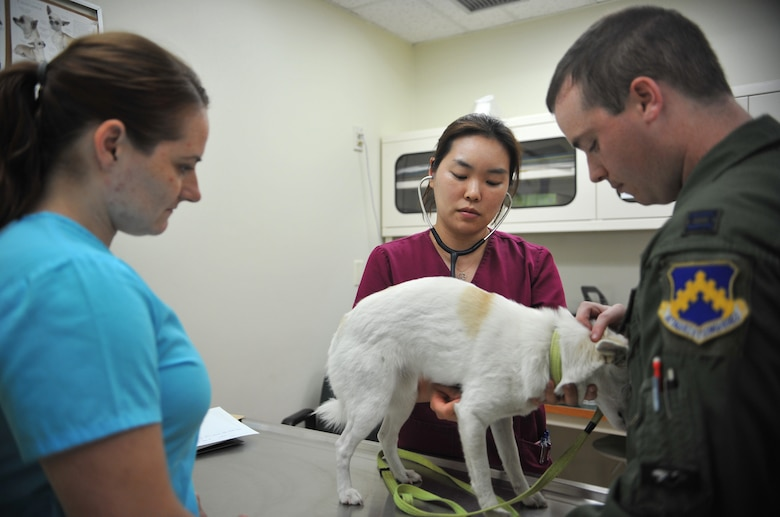 Dr. Kyongmi Kim, 106th Medical Detachment veterinarian, listens to the heartbeat of J.D., a jindo mix, during an outprocessing appointment at the Veterinary Treatment Facility on Osan Air Base, Republic of Korea, June 2, 2014. Capt. Ryan Mendenhall, 80th Fighter Squadron F-16 Fighting Falcon pilot, brought J.D. in for a microchip and a rabies vaccination as part of his permanent change of station from Kunsan AB, ROK, to Spangdahlem AB, Germany. (U.S. Air Force photo/Airman 1st Class Ashley J. Thum)