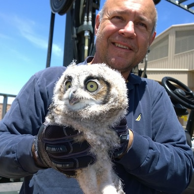 Mr. John Harris, 309th Aerospace Maintenance and Regeneration Group aircraft electrician, takes a photo with a great horned owl chick he helped rescue at Davis-Monthan Air Force Base, Ariz. The great horned owl family may be seen daily performing touch and go flight exercises together from the wings of a C-130. (Courtesy Photo)
