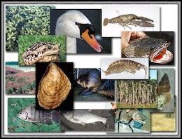 The ISIS provides access to information on the identification, biology, ecology and associated management strategies for more than 260 invasive species.