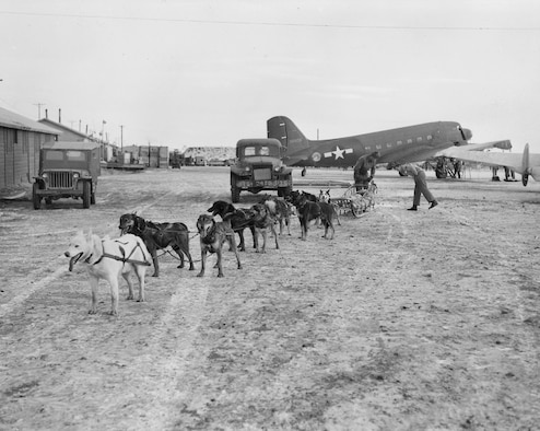 A team of military working dogs rests outside a Douglas C-47 Skytrain circa 1945 at Ladd Field, Fairbanks, Alaska. (Photo courtesy of University of Alaska, Fairbanks, archives)