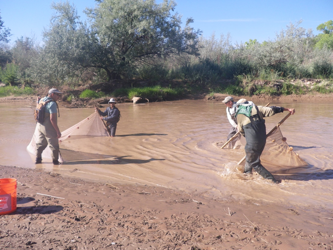 ALBUQUERQUE, N.M., -- Corps and SWCA biologists using the combined box and bag seine technique to monitor fish populations in the Rio Grande.