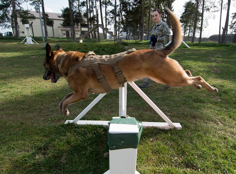 Military working dog Katya jumps a hurdle while running through the obedience course with U.S. Air Force Staff Sgt. Shannon Hennessy, 52nd Security Forces Squadron MWD handler from Colusa, Calif., at the 52nd SFS dog kennel at Spangdahlem Air Base, Germany, March 19, 2014. Daily training such as this not only improves the skills and fitness of the MWDs but also builds camaraderie between the handlers and their dogs. (U.S. Air Force photo by Staff Sgt. Chad Warren/Released)