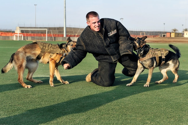 working dogs and handlers essay The sport of schutzhund: a photographic essay what's inside see dogs and puppies working hard at training, trialing and just being dogs.
