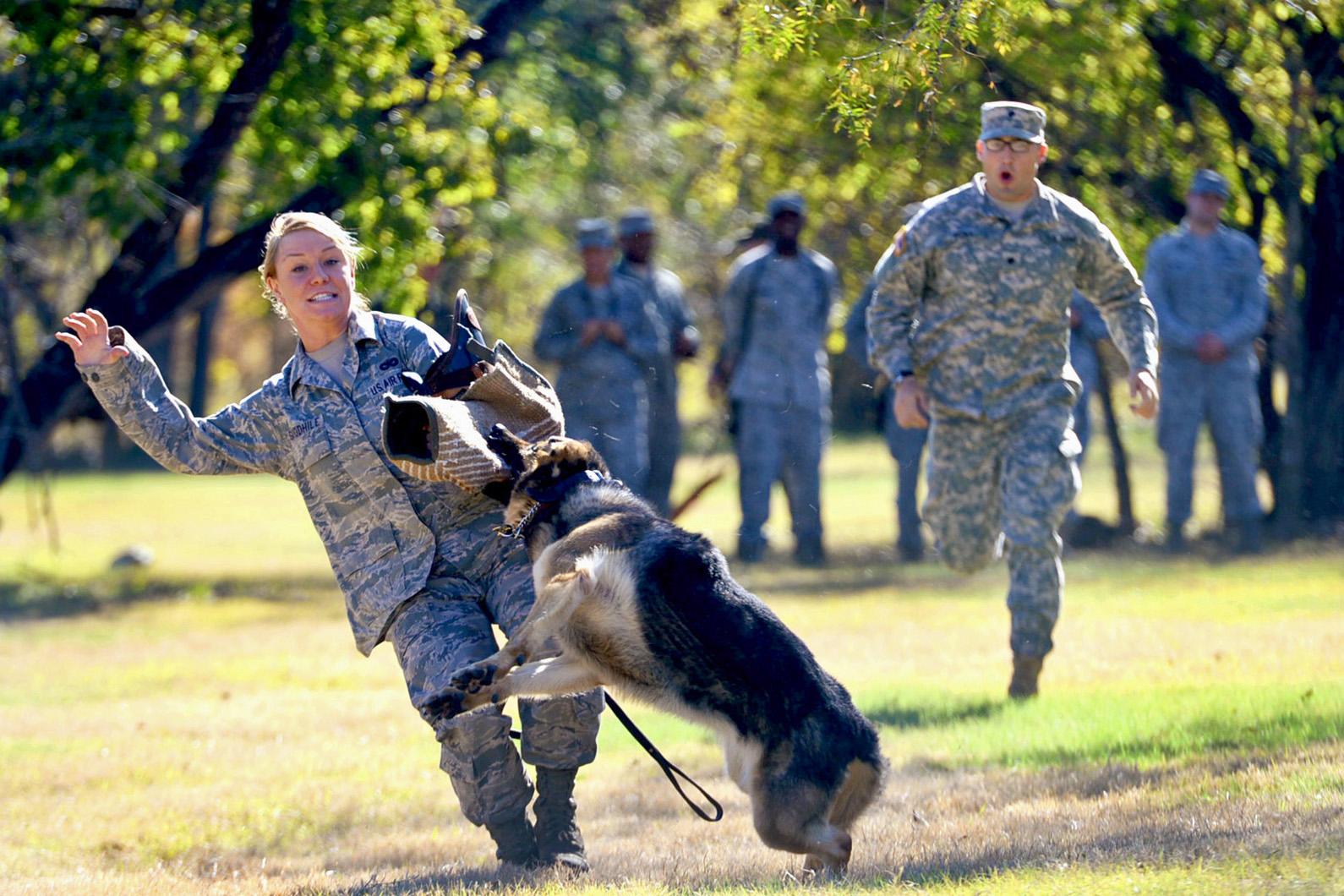 Dog Traine Search