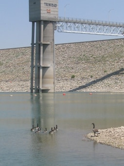 TRINIDAD LAKE, COLO., -- Some of the ducks at Trinidad Lake enjoy the water in this May 15, 2012, photo by Marvin Urban.