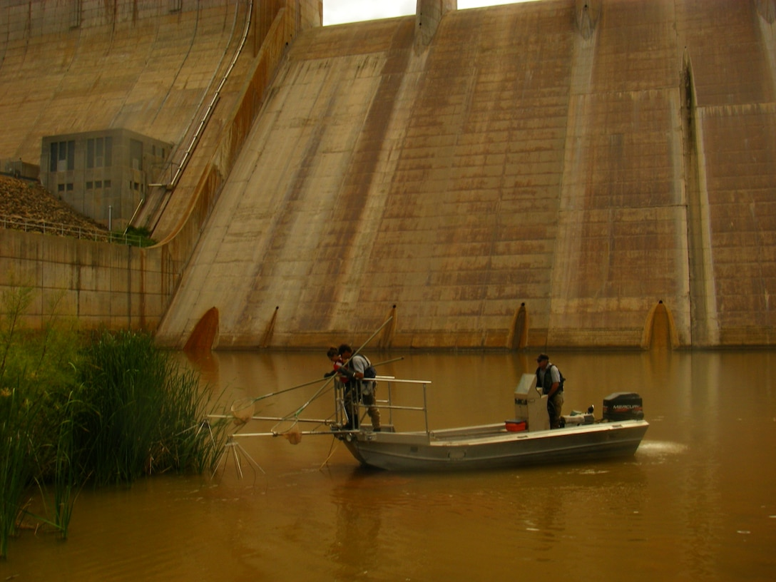 CONCHAS DAM, N.M., -- Electrofishing the Conchas Dam Stilling Basin. A small team from the District and the New Mexico Department of Game & Fish conducted a fish rescue June 21, 2012, in the lake's stilling basin in anticipation of draining the stilling basin this summer for an inspection of the dam by the District's Operations Division. Photo by Michael Porter.