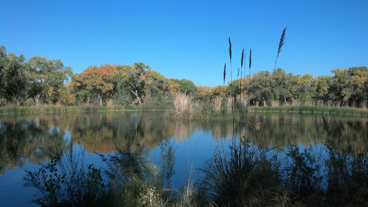 ALBUQUERQUE, N.M., -- The Albuquerque Biological Park Wetlands on Oct. 16, 2012. Photo by Ondrea Hummel.