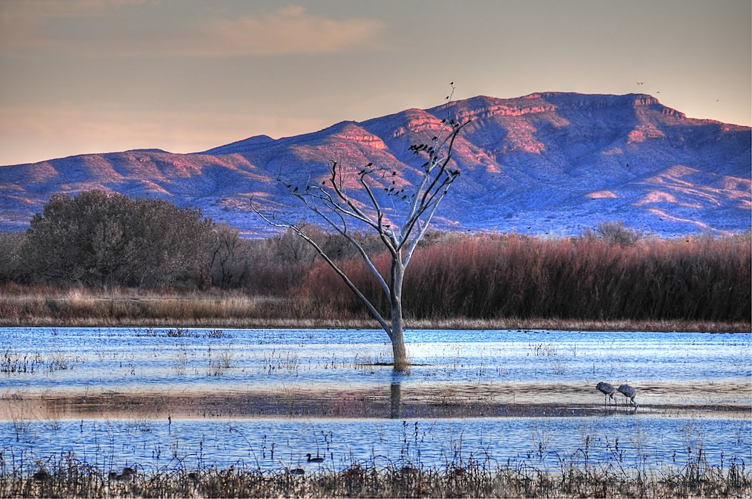 SOCORRO, N.M., -- Bosque Del Apache as seen in this photo taken the evening of Nov. 29, 2009, taken by Richard Banker. This photo place second, based on employee voting.