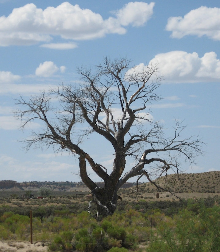 OJO ENCINO, N.M., -- Cottonwoods have disappeared from this landscape on the Navajo Nation – only remnants remain.  This was photographed by Corinne O'Hara, Aug. 11, 2011.