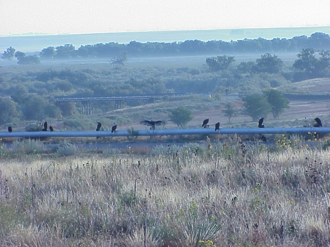 JOHN MARTIN RESERVOIR & DAM, Colo., -- Buzzards wait for the sun to fully rise on the south addit road as the sun was coming up and the mist was rising in the background. Photo by Debby Schibbelhut, Sept. 29, 2011.