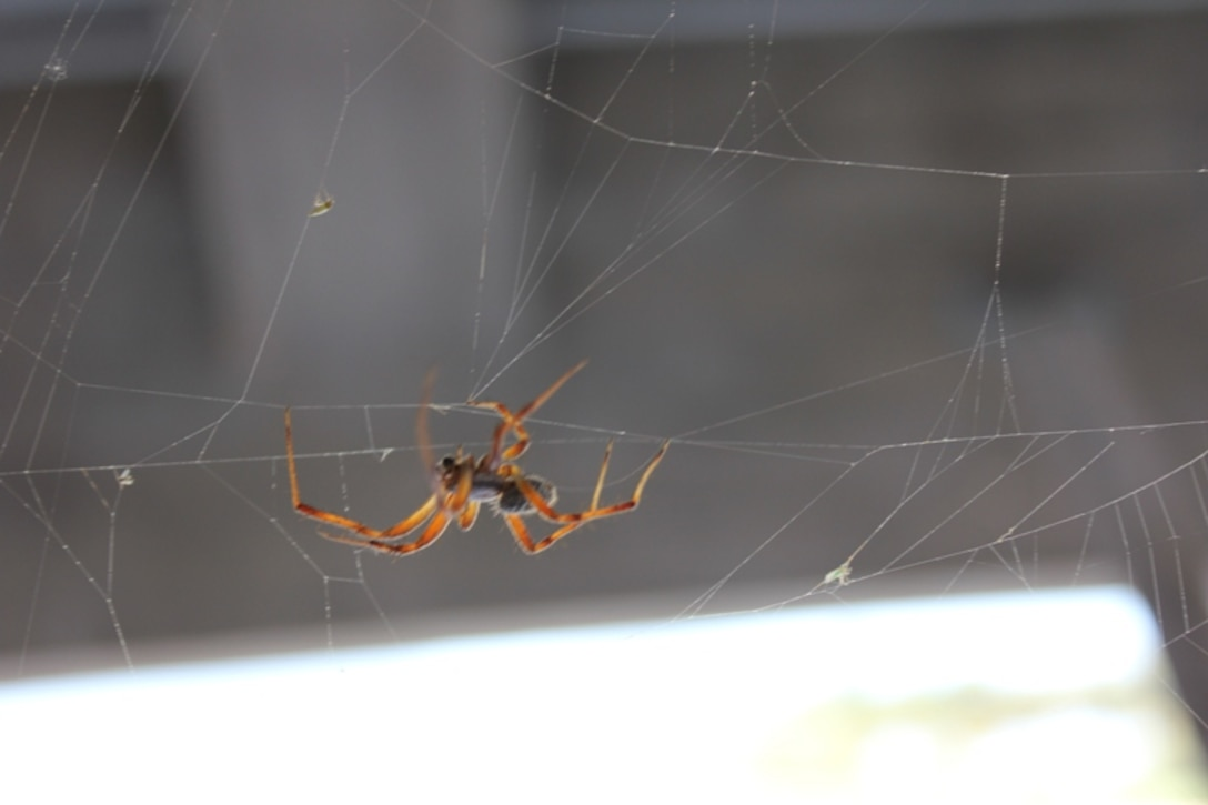 JOHN MARTIN DAM, COLO., -- A spider is hard at work on its web. Photo by Karen Sill, Aug. 2, 2010.