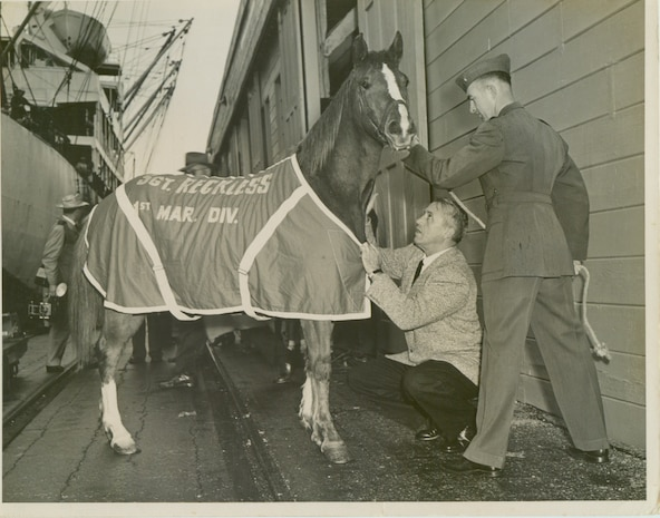 U.S. Marine Corps Staff Sgt. Reckless prepares to go to Marine Corps Base Camp Pendleton, Calif. after serving in the Korean War with the 5th Marine Regiment. Reckless was purchased to help move supplies and ammunition to firing points in the rough terrain during combat operations. During the 140th Kentucky Derby, Reckless sponsored the Eight Belles race in an effort to increase awareness about the Korean War. (Courtesy Photo)