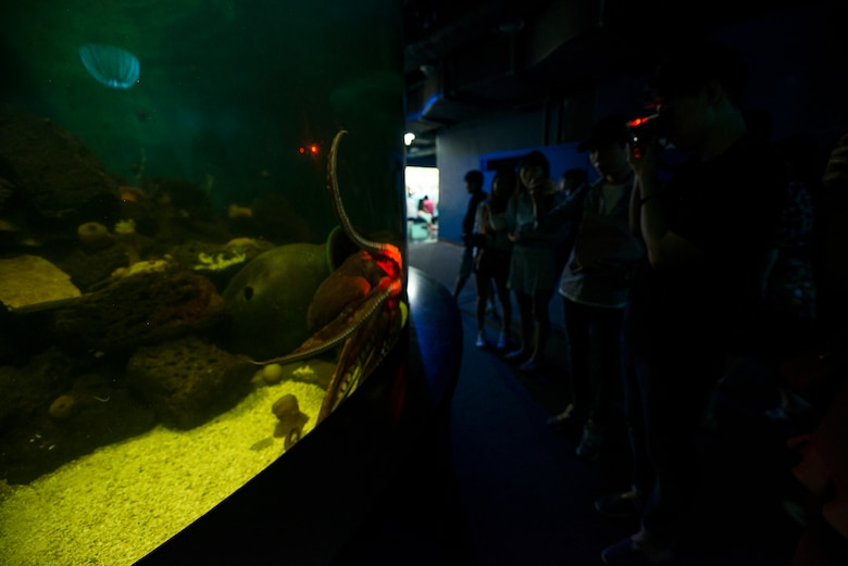 Visitors take pictures of an octopus at the COEX Aquarium May 24, 2014, in Seoul, Republic of Korea. The aquarium is open every day from 10 a.m. - 8 p.m. (U.S. Air Force photo by Staff Sgt. Jake Barreiro)