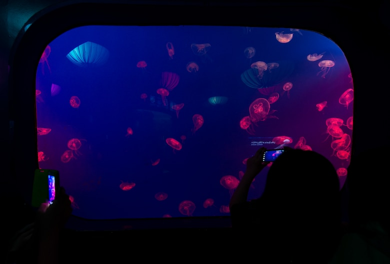 Spectators take pictures of the jellyfish tank at the COEX Aquarium May 24, 2014, in Seoul, Republic of Korea. The aquarium is a family attraction in downtown Seoul, located just off the Samseong metro line. (U.S. Air Force photo by Staff Sgt. Jake Barreiro)