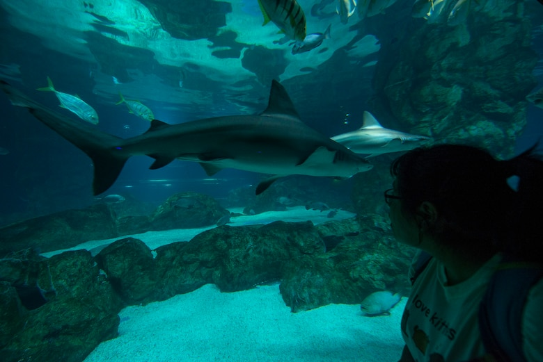 Cecelia Guadalupe Ortiz-Barreiro looks in the shark tank at the COEX Aquarium May 24, 2014, in Seoul, Republic of Korea. While many species of shark are considered the top predator in their food chains, a number of their habitats and populations have been effected by human actions. (U.S. Air Force photo by Staff Sgt. Jake Barreiro)